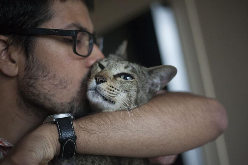 thomas-kissing-neighbour-cat-sammy