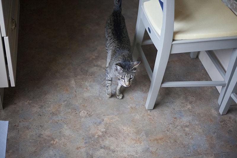 neighbourhood-cat-sammy-waiting-for-food