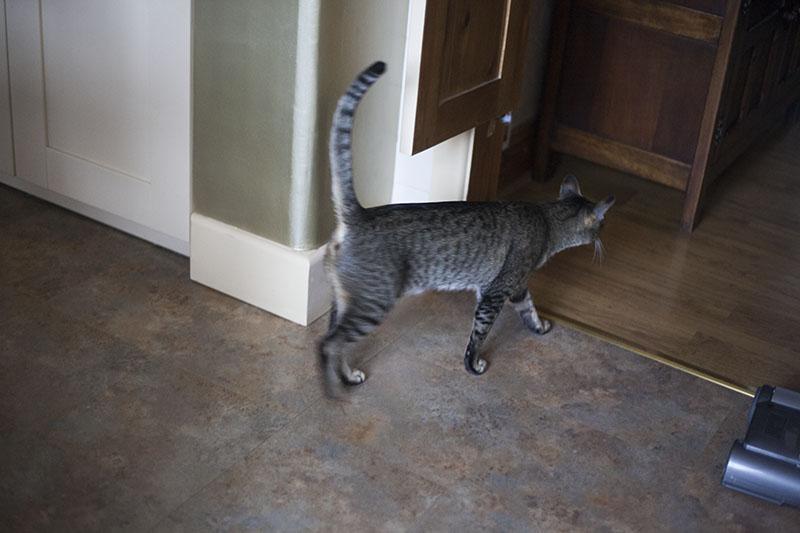 following-sammy-neighbour-pet-cat