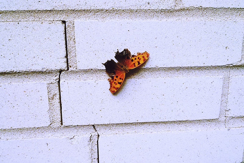 blog-going-well-butterfly-picture