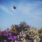 butterfly-flying-above-flowers
