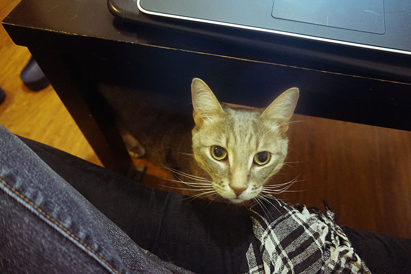 cat-avery-staring-from-under-desk
