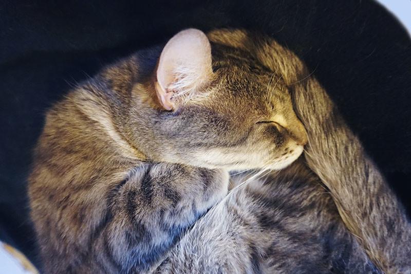 elise-and-thomas-avery-sleeping
