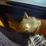 kitty-cat-under-coffee-table-avery-elise-and-thomas