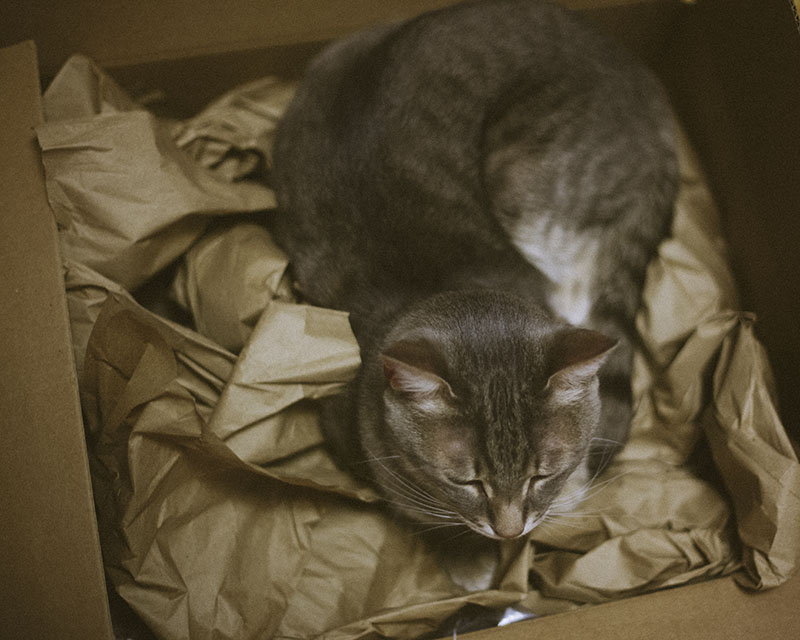 kitty-cat-nesting-cardboard-box-amazon-packaging