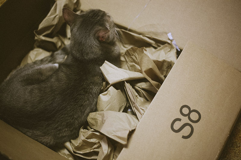 cat-sleeping-in-cardboard-box-packaging-nest
