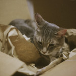 avery-kitty-cat-nesting-cardboard-box-packaging-elise-and-thomas