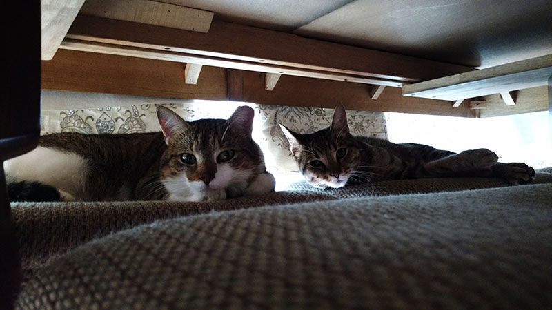 cats-under-table-elise-and-thomas