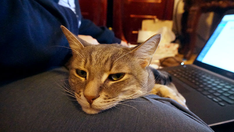 avery-snuggling-on-elises-lap-cute-lapcat