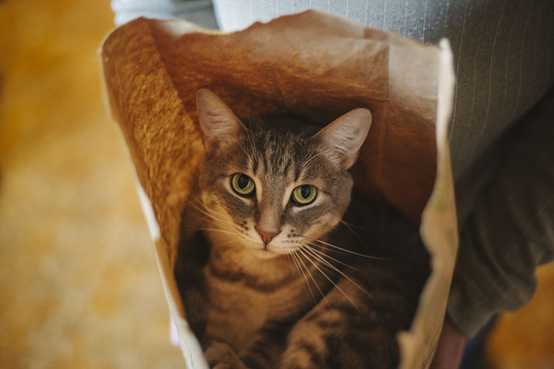 elise-and-thomas-avery-cat-in-lcbo-paper-bag