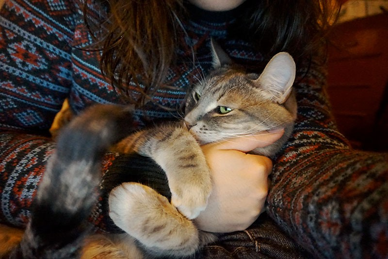 pet-cat-holding-arm-cute-elise-and-thomas