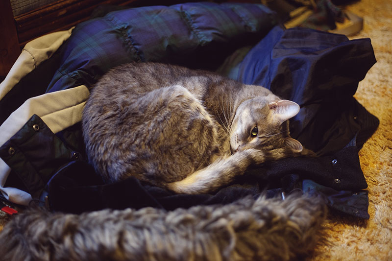 cat-avery-sleeping-in-winter-coat-thomas