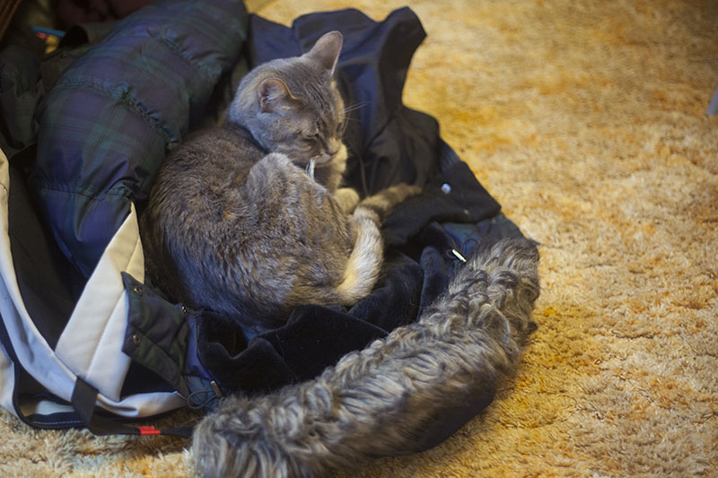 cat-napping-in-winter-jacket-elise-and-thomas