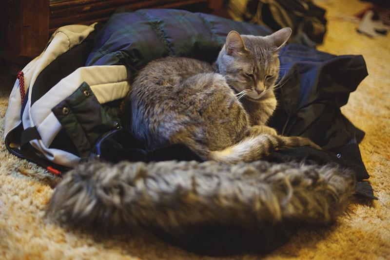 kitty-cat-sleeping-in-winter-jacket