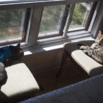 cats-lying-down-chairs-sunny-spot-sleeping