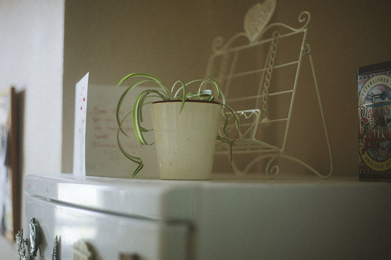 house-plant-on-fridge-kitchen-photography