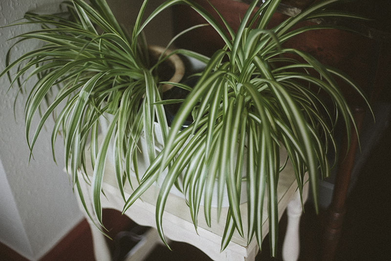 house-plants-vintage-look-english-house