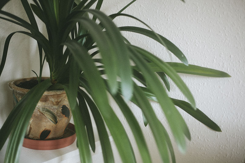 large-houseplant-potted-green-minimalist