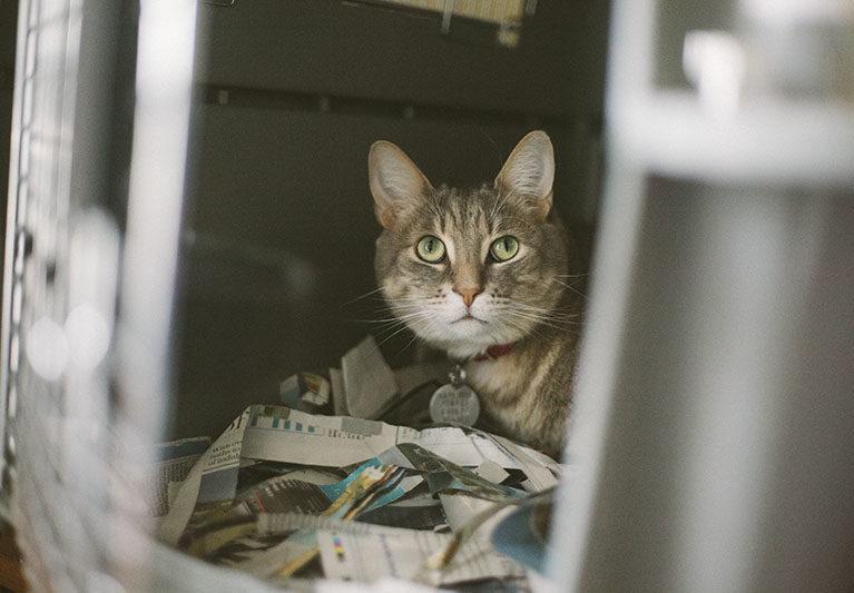 avery-pet-cat-sitting-in-kennel