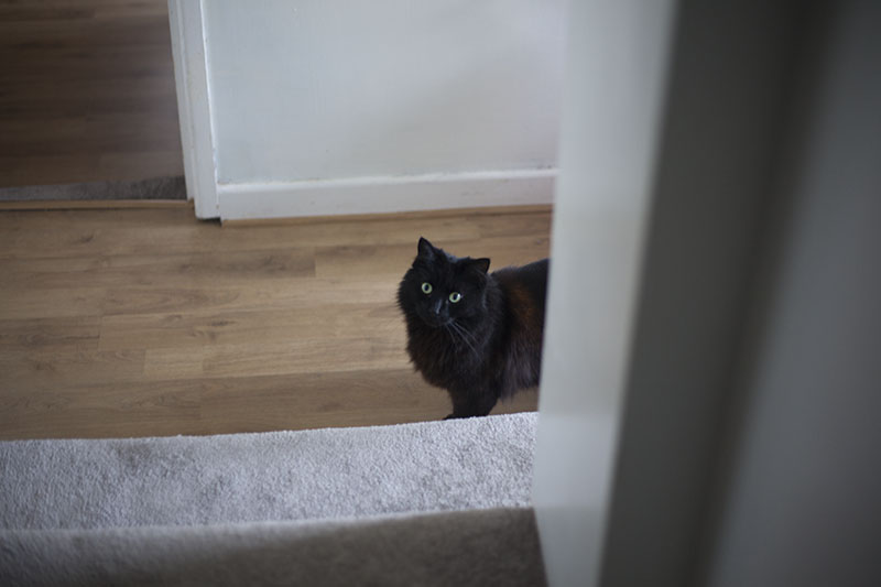black-cat-peeping-around-corner-martha