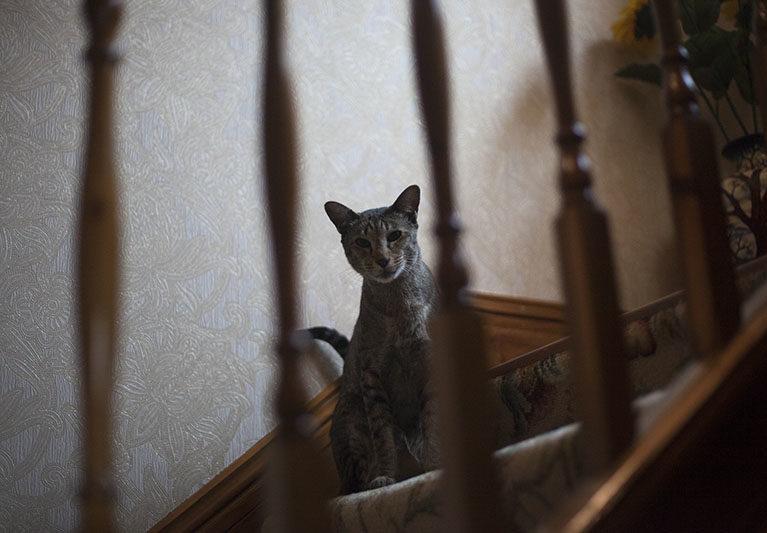 sammy-cat-staring-staircase-stairwell-kitty