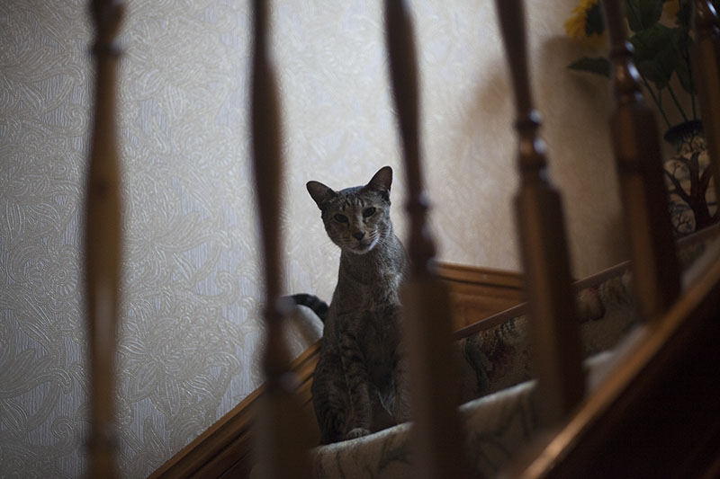 sammy-cat-staring-staircase-stairwell-kitty