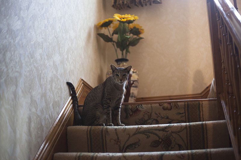 neighbour-cat-sammy-staring-sitting-staircase