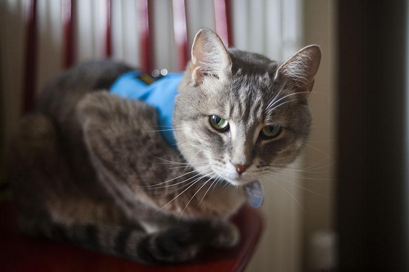 cute-cat-waiting-breakfast-green-eye-tabby