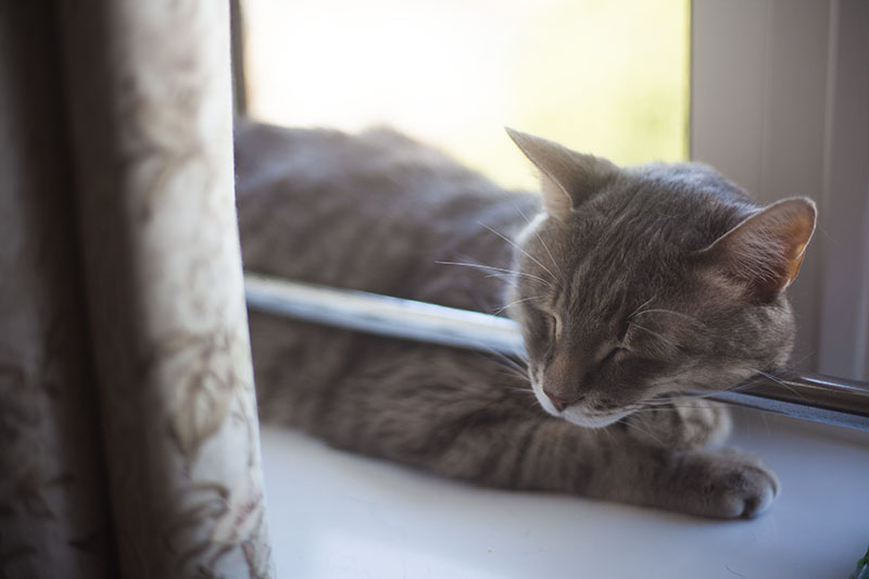 cat-resting-head-on-window-pole-sleeping-comfortably