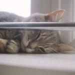 cat-waking-up-from-nap-elise-and-thomas