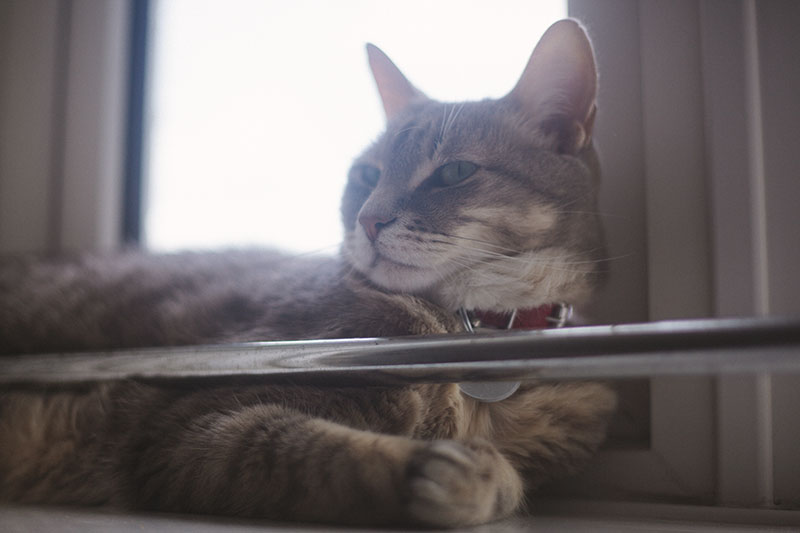 kitty-cat-sitting-on-window-sill-red-collar