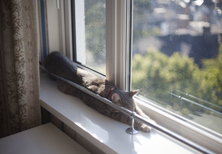 cat-stretching-out-arms-while-sleeping-cute-adorable