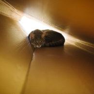 Cardboard Tunnel