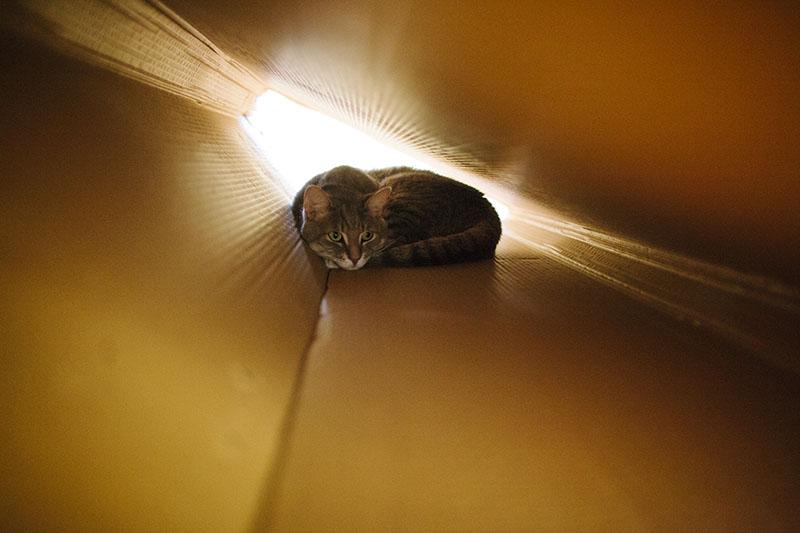 cute-kitty-cat-large-cardboard-box-tunnel