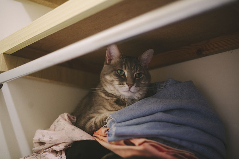 kitty-cat-sleeping-in-clothes-closet-elise-and-thomas-pet