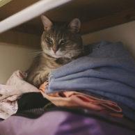 Closet Kitty