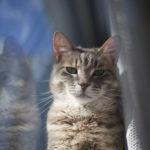 epitomy-of-avery-elise-and-thomas-cat-winter-portrait