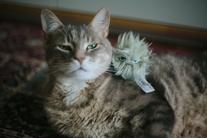 cute-cat-with-grumpy-cat-hairball-toy