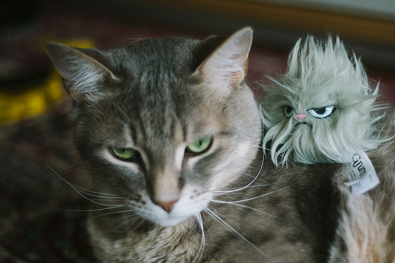 same-face-grumpy-cat-toy-kitty-pics