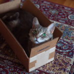 cat-in-a-small-cardboard-box