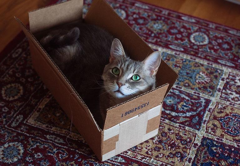 cat-in-a-small-cardboard-box