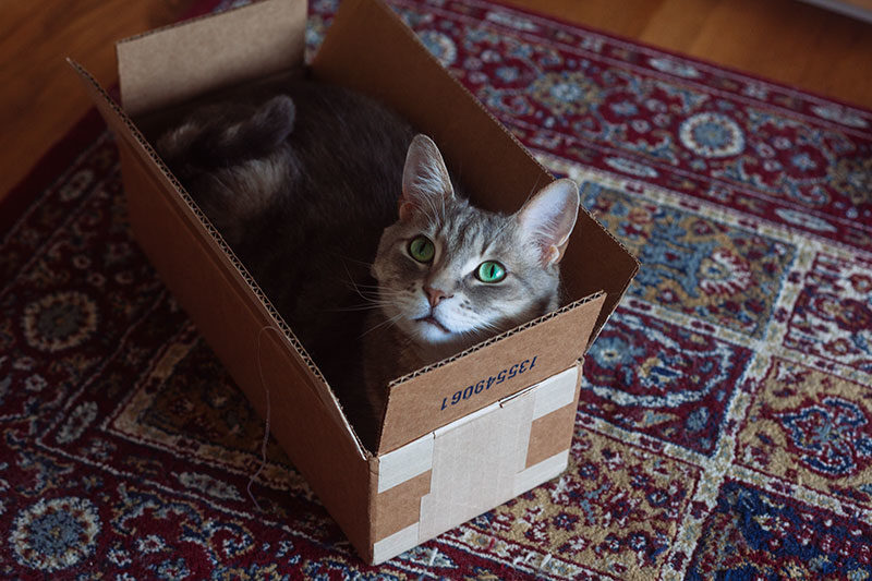 When your cat finds the perfect sized box…