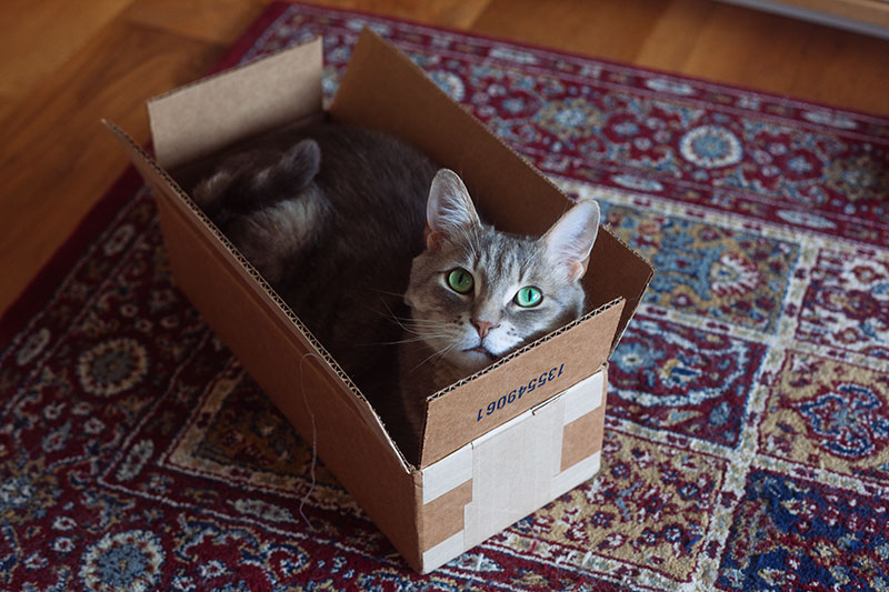 super-cute-picture-cat-in-cardboard-box