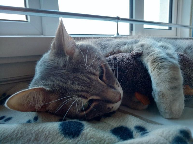 avery-cuddling-his-pet-rat