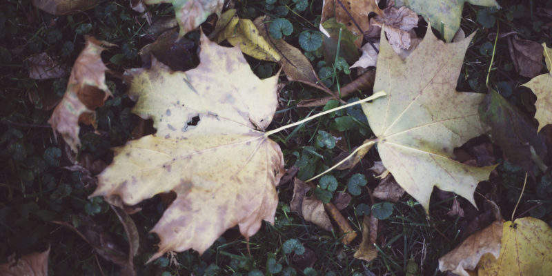 elise-xavier-leaf-photography