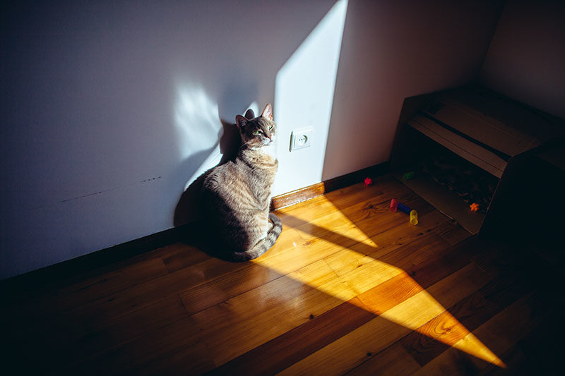 avery-the-cat-sitting-in-morning-sun