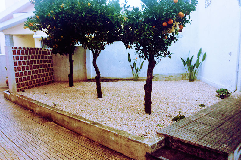 garden-after-landscaping