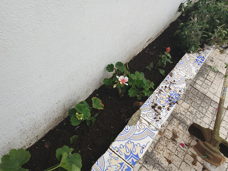beautiful-flowers-cuttings-from-neighbour