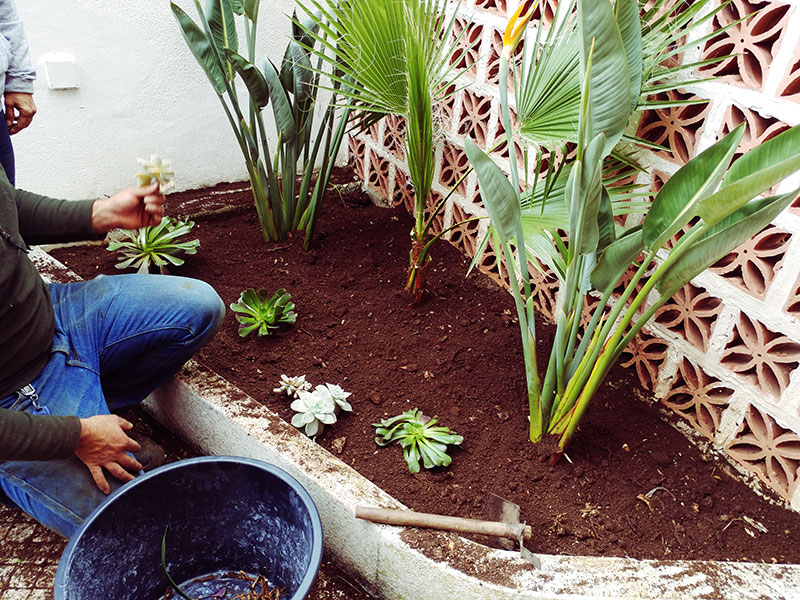 planting-garden-remodelling