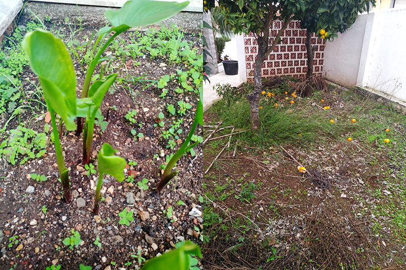 before-weeds-and-enormous-mess